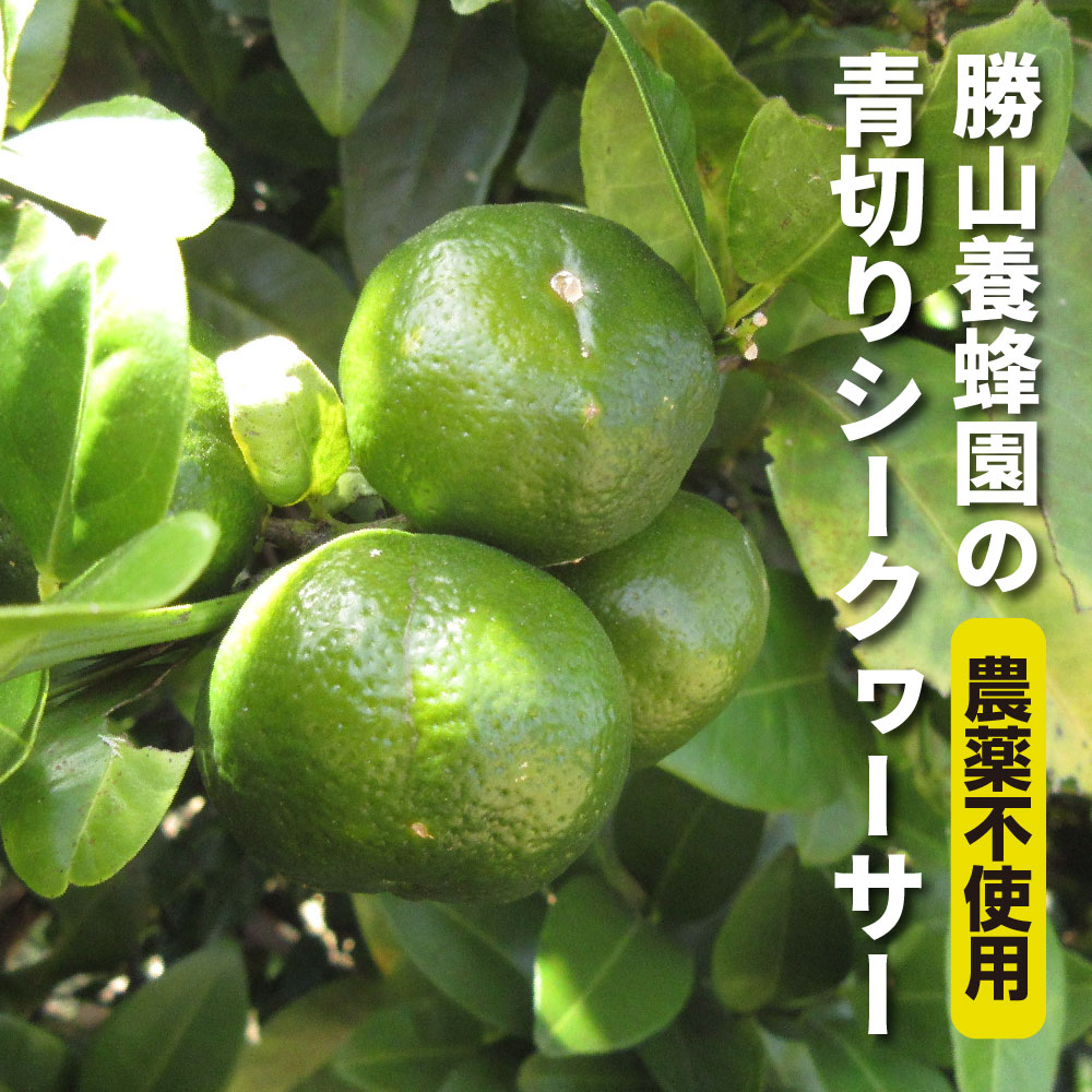 勝山養蜂園のシークヮーサー果実