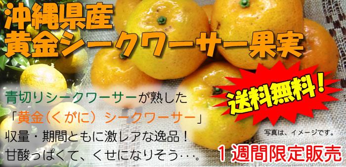 沖縄県産・黄金シークヮーサー果実(完熟)