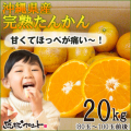沖縄山原産たんかん20kg